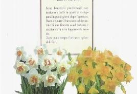 الزهور والفاكهة من أجل لفتة حب - المبادرات الاجتماعية