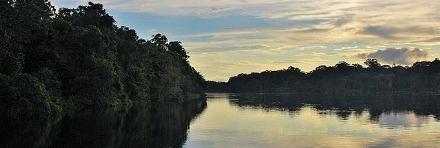 Amazzonia 501 - Ambiente