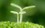 Eco Sostenibilità - Come lavoriamo