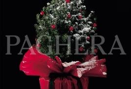 A christmas tree for charity - طرح های اجتماعی