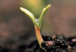 Terza fase dell'intervento - Eco Biotech
