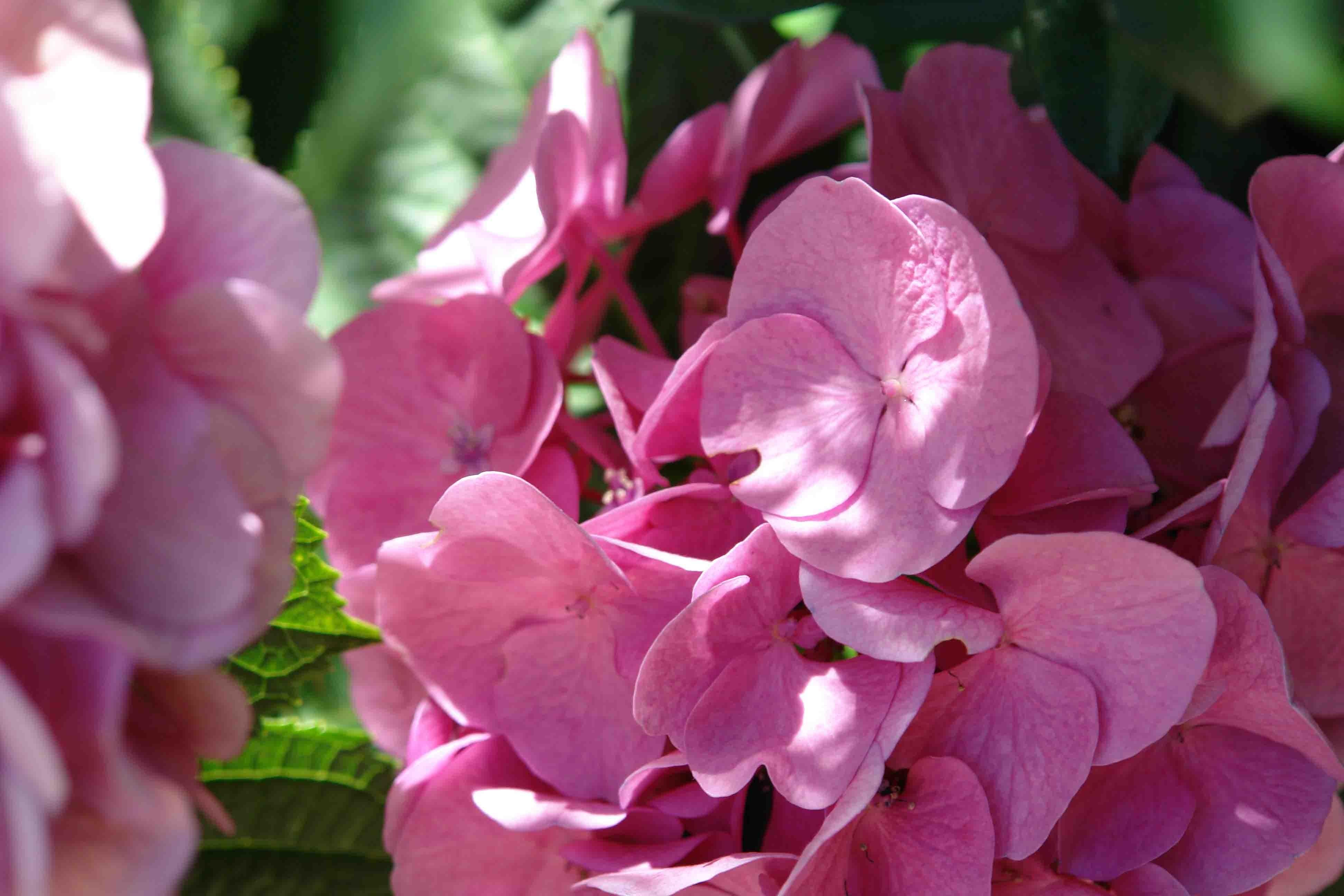 غرف النباتات - الشرفات