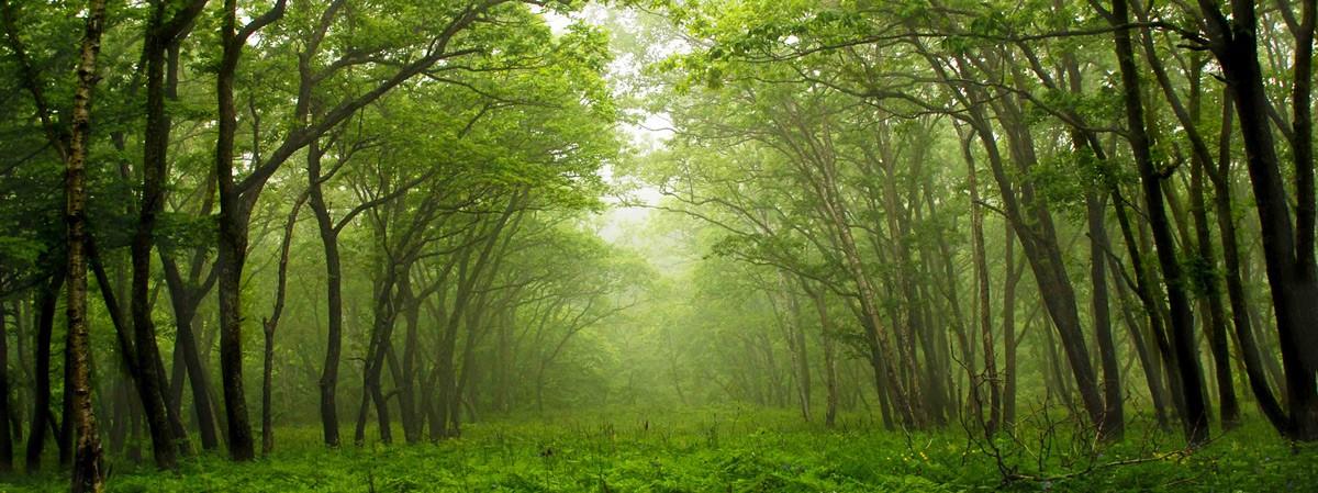 Eco gardens Paghera