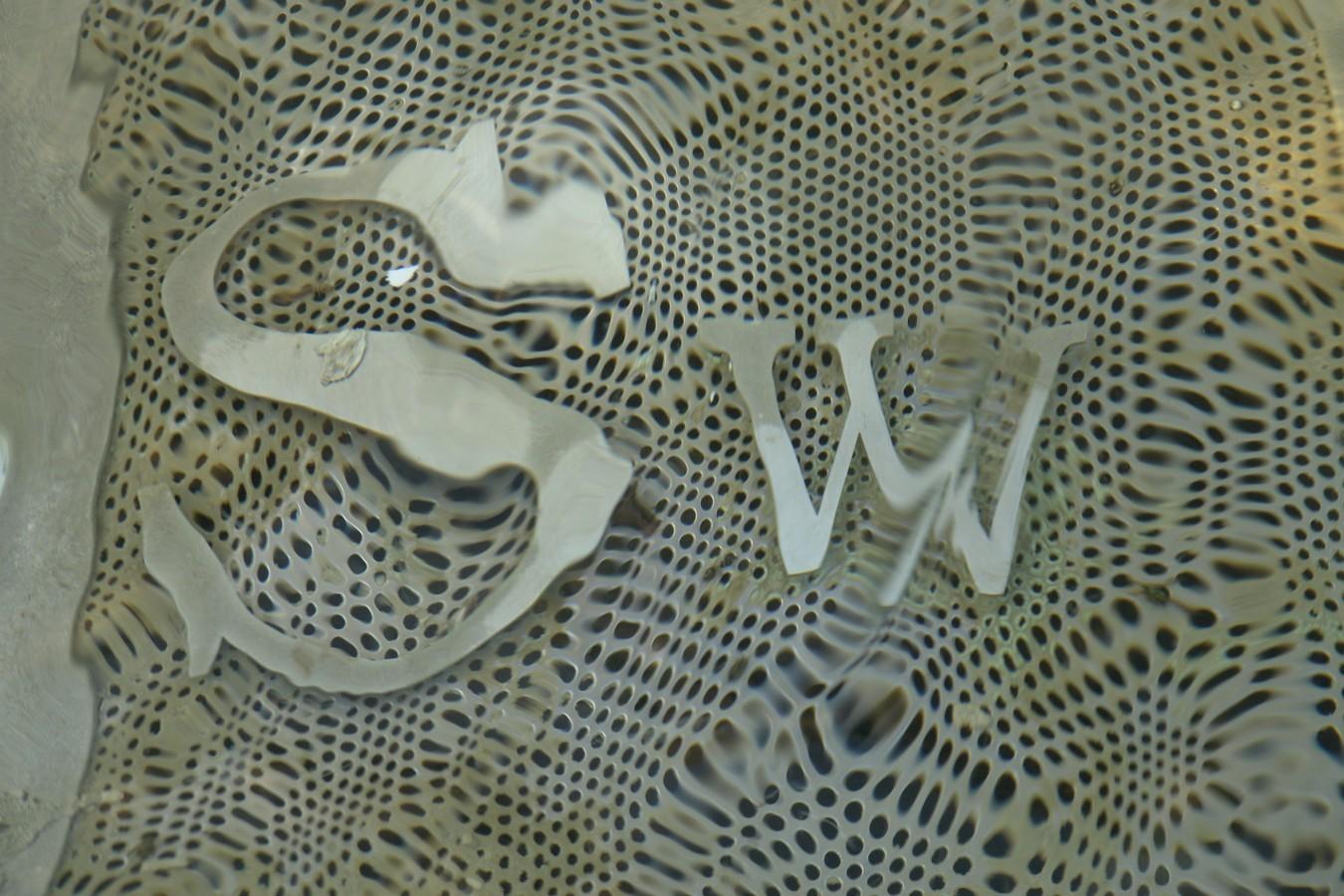Swinger - Sedi Aziendali