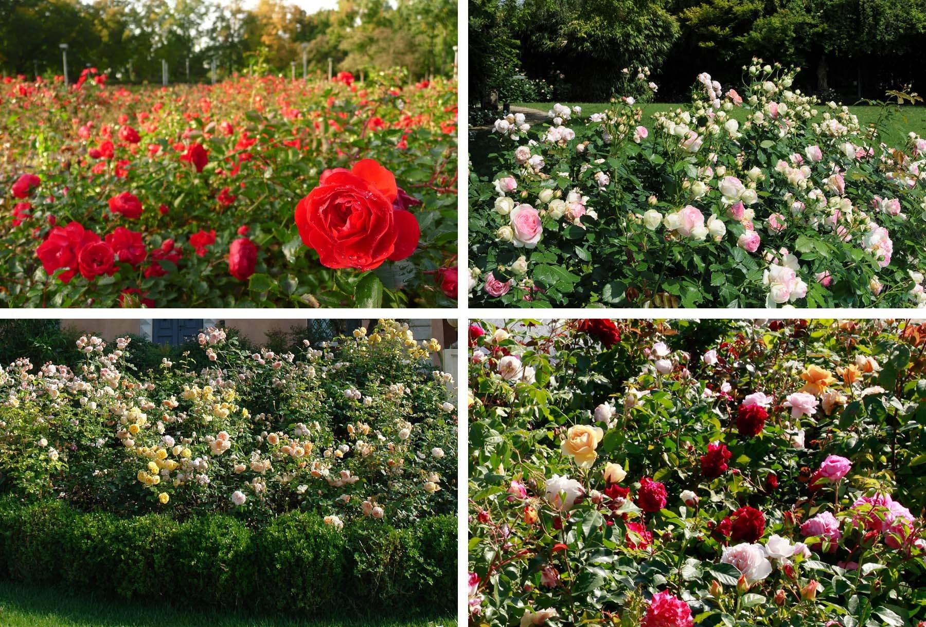 An Italian garden in China - فضاهای عمومی و شهربازی ها