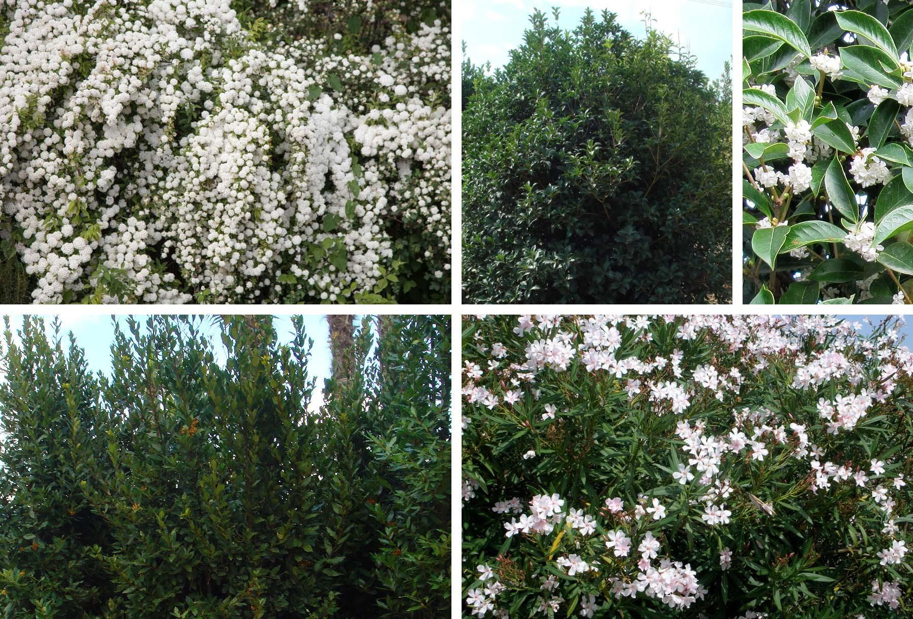 Un giardino sospeso - Terrazze