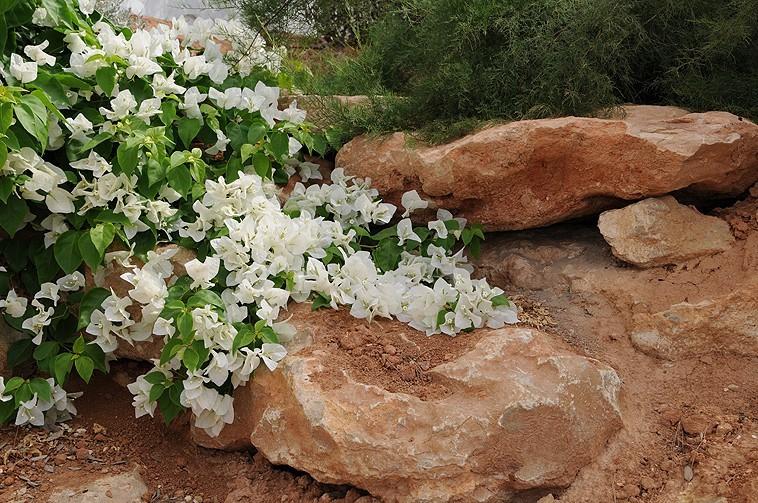 Under Ibiza sun - Gardens