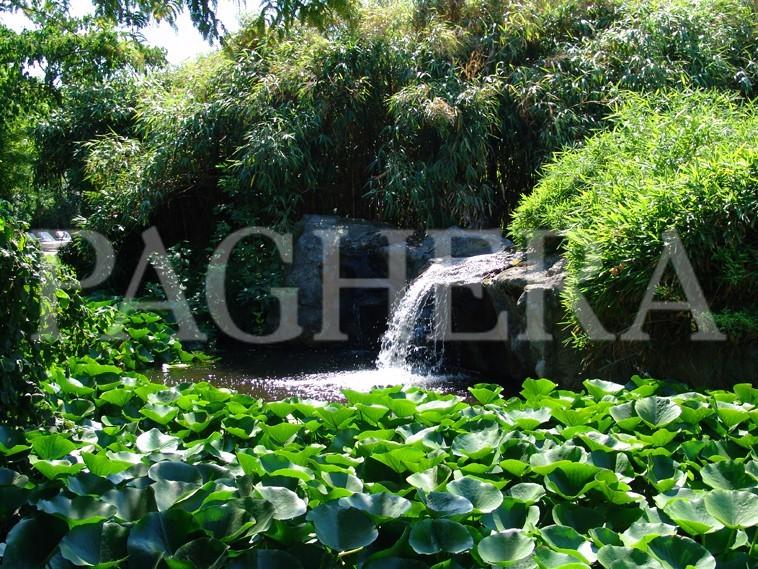 Hedonistic Garden -